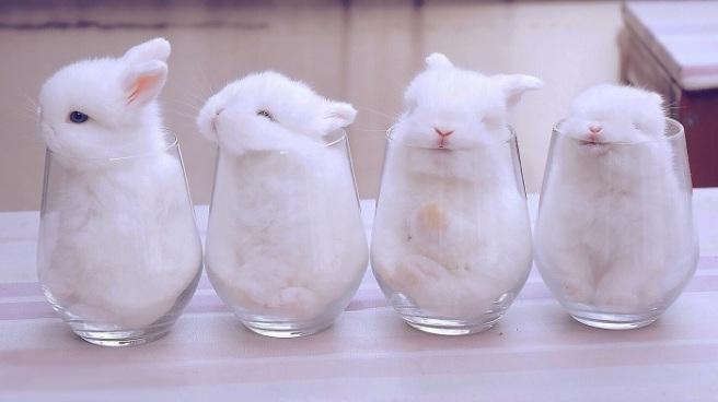 Sleepy-bunnies